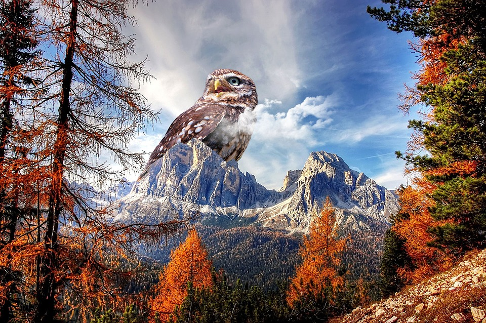 owls-live-in-mountains