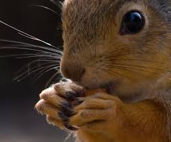squirrel-large-eyes