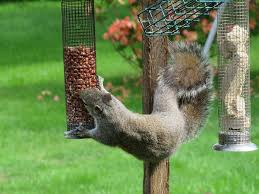squirrels-love-nuts