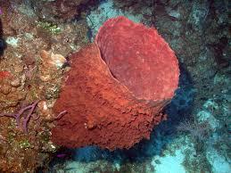 sponge-underwater