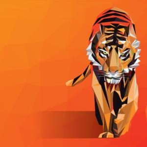 tiger-information