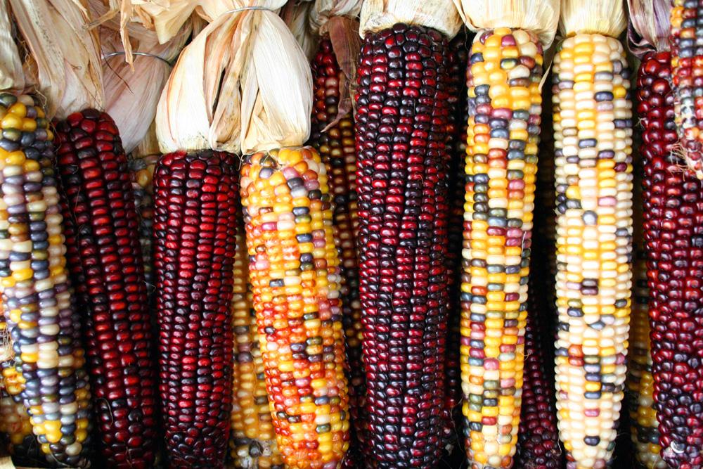 corn-experiment
