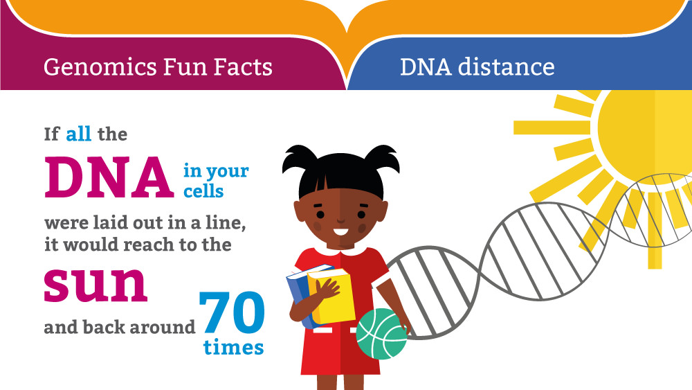 dna-fun-fact