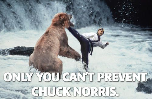 chuck-norris-fighting-bear