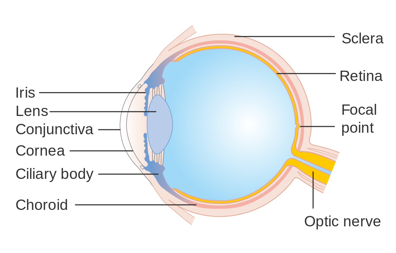 Eye Facts Cool Kid Facts