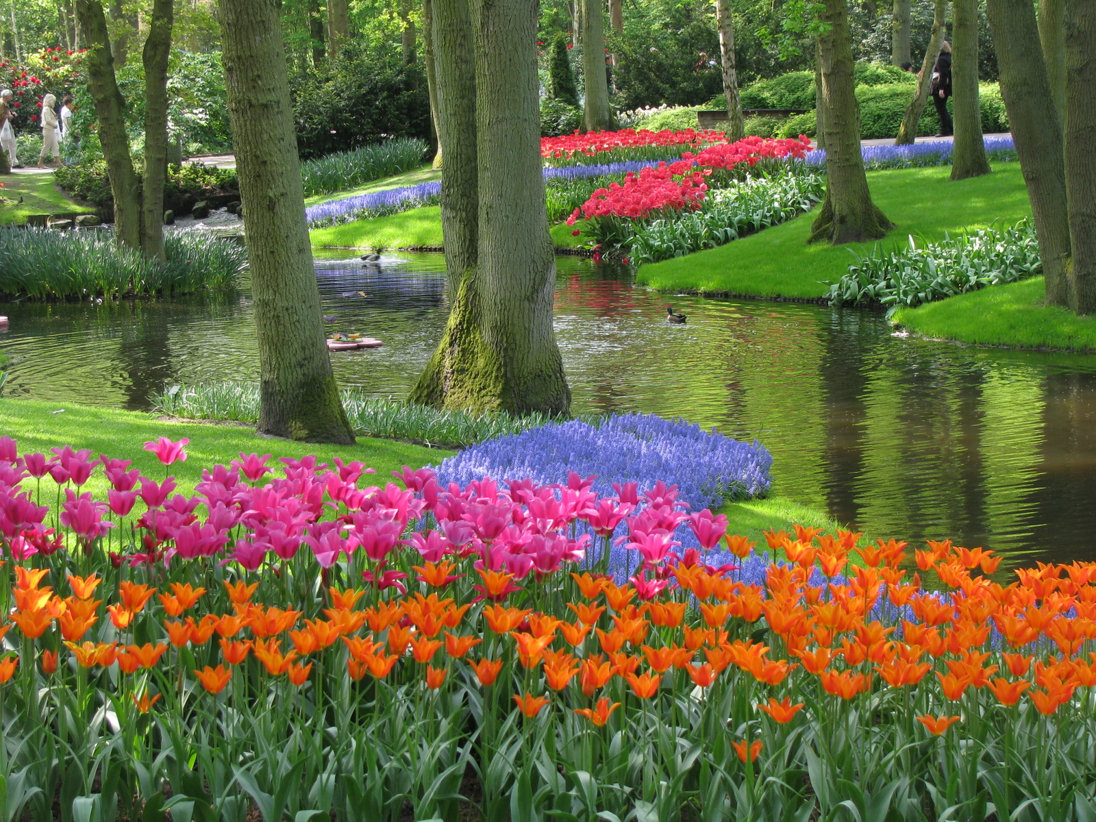 flowers Netherlands