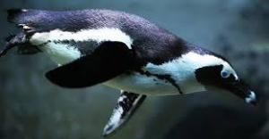 penguin camouflage