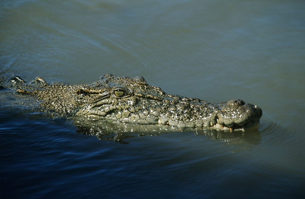 crocodile facts