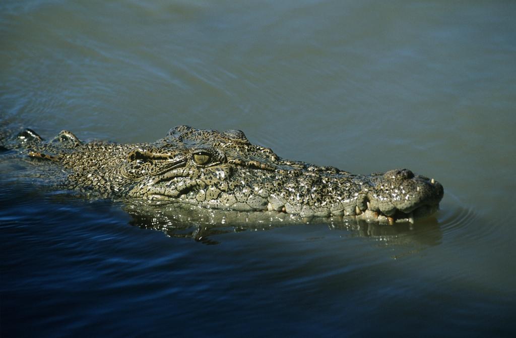 crocodile facts