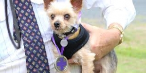 purple cross for dog