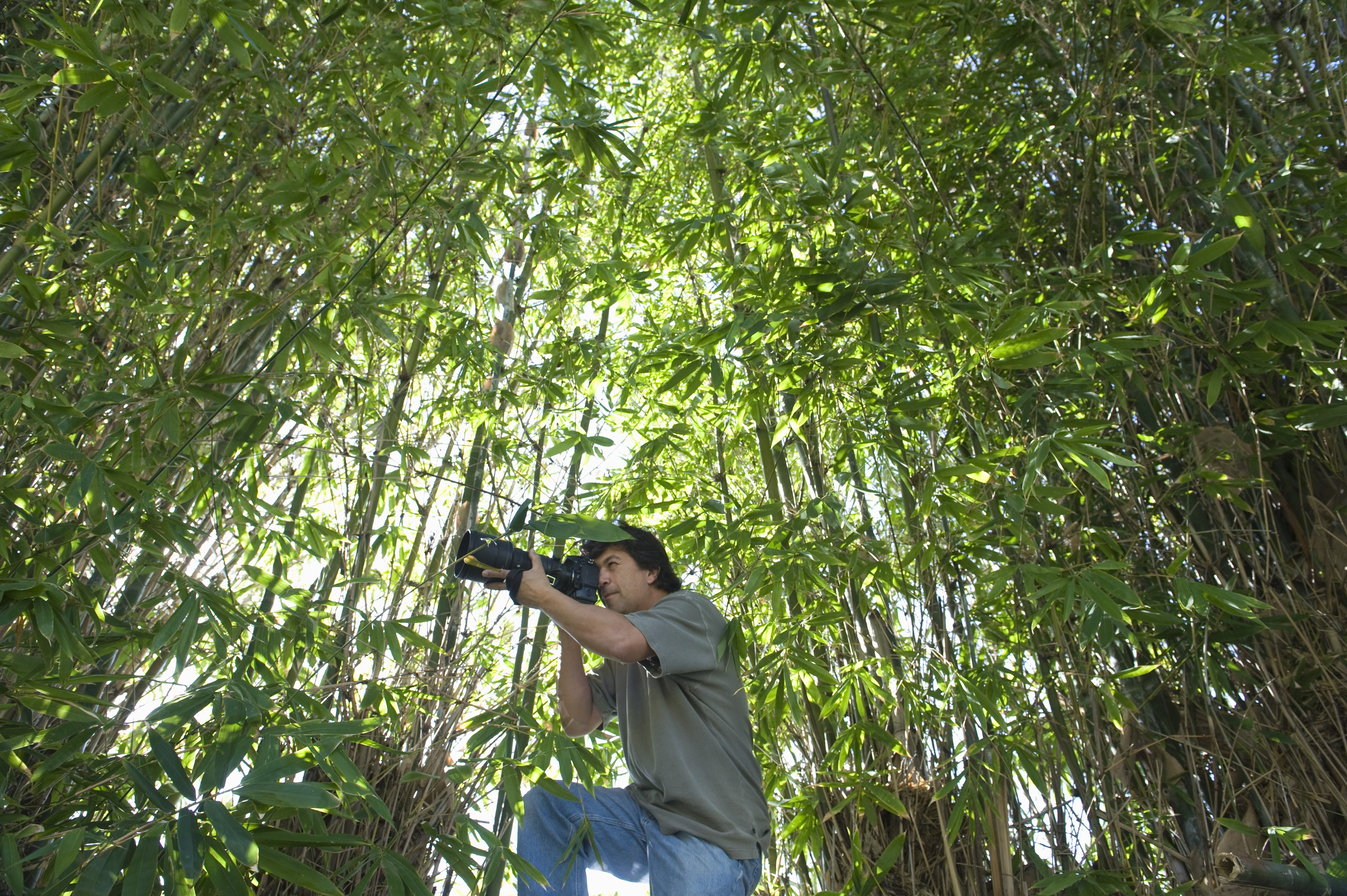 pandas eat bamboo