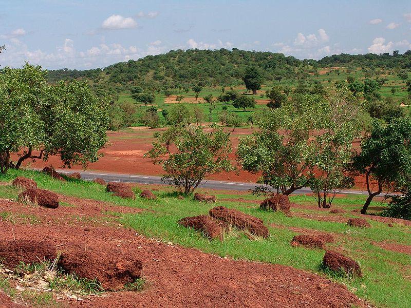 Sahel_forest