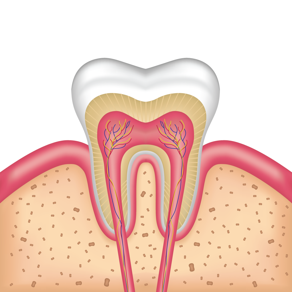 gums-tooth