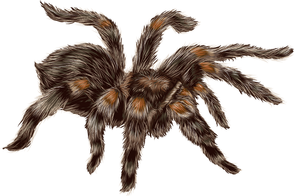 tarantula graphic