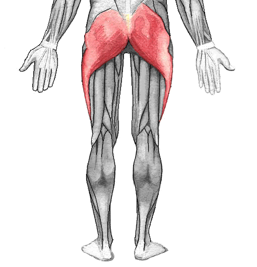 Gluteus maximus location