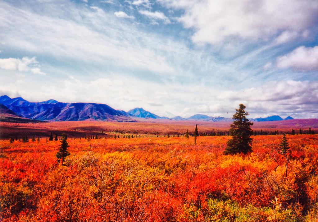 alaska autumn tundra