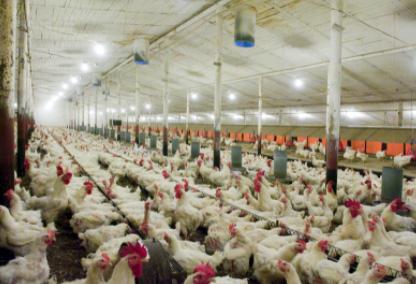 chicken henhouse